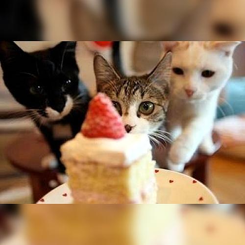 ショートケーキにロックオン!