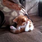 足をピンと上げて居眠りをするニャンコ