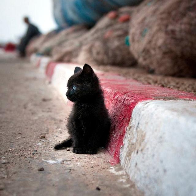 はるか彼方を見つめる猫ちゃん