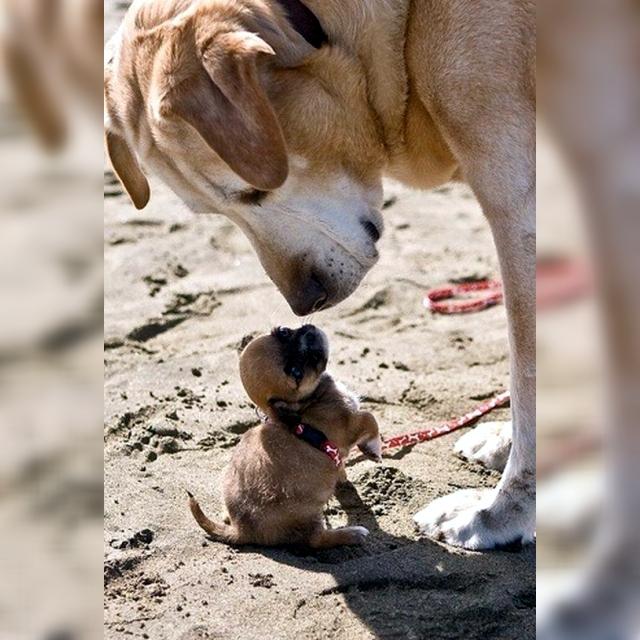 親犬と仔犬の絆