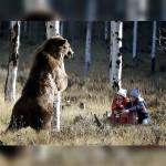 もしもクマが臆病な性格だったら・・・