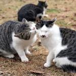仲良し猫カップルに嫉妬するニャンコ