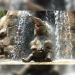 象さんの豪快な水浴び