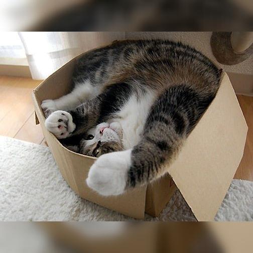 猫と段ボール箱