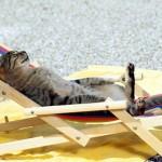 猫の夏休暇