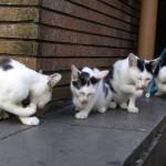 猫の希有な出来事