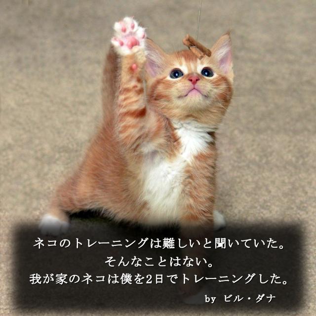 猫に纏わる名言