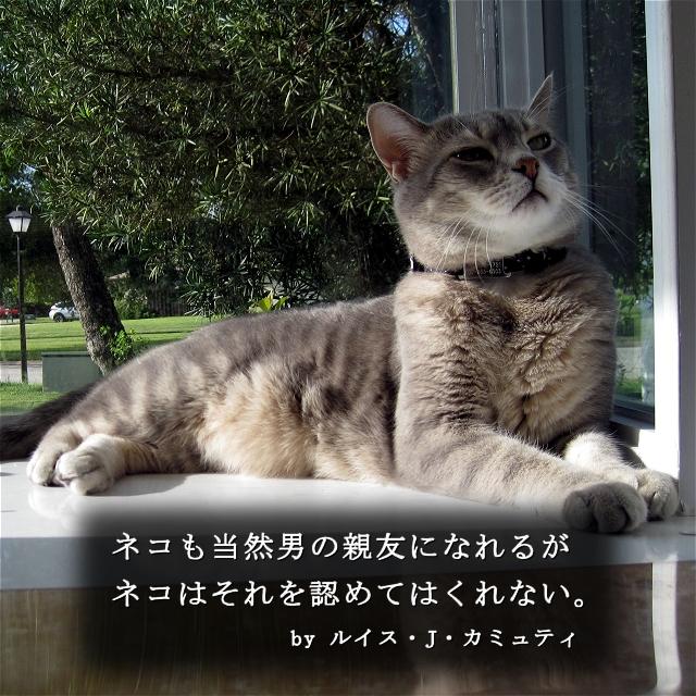 猫に纏わる格言