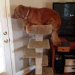 犬の勘違い