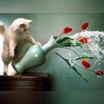 猫の悪戯/決定的瞬間