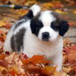紅葉と仔犬