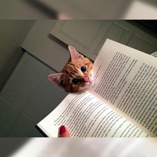 猫は注目してもらえるベストな位置をよく心得ている