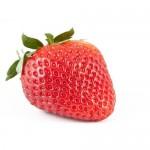 イチゴの発芽に驚き!