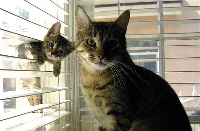 この親にしてこの子あり – 猫編
