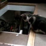 悪戯好きな猫に階段から突き落される猫