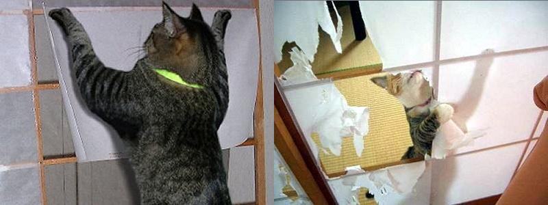 猫の障子破りが好きな理由