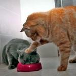 好きなツナは無いけど、我慢して食べなさい!