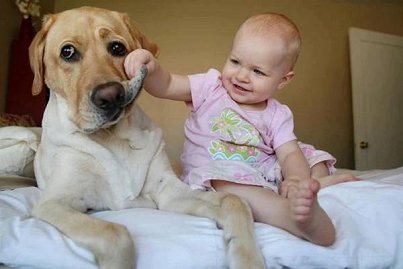 ワンちゃんと赤ちゃんのほのぼの画像