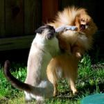 ニャンコは強し! 猫パーンチ!!