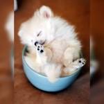 鉢の中で居眠りするワンちゃん