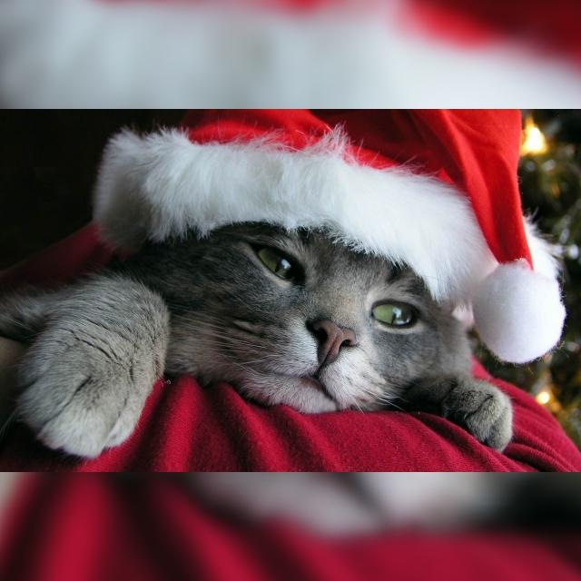 サンタさん早く来ないかな~?