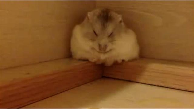 可愛いハムスターがお寝んね中。すると突然…?