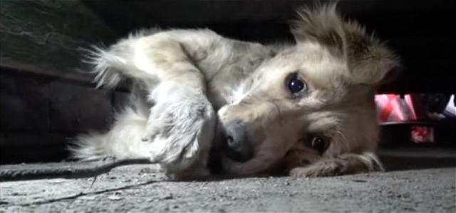 【感動実話】泥だらけの捨て犬が、心を許していく姿に涙