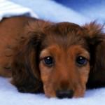 【涙腺崩壊】最後の力を振り絞ってサヨナラをしてくれた愛犬