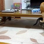 猫の策士過ぎる2段階攻撃 - The cat is a schemer –