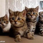 【爆笑】子猫のダンシング コーラスライン