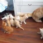 ジャンプに失敗した母猫に驚いた子猫がクモの子みたいに・・・
