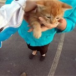 ユーチューブに投稿された動画の女性ライダーによる猫の救出劇が話題に