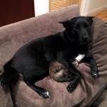 雷に怯える子猫を抱きしめる犬…と思ったら意外な展開が・・・