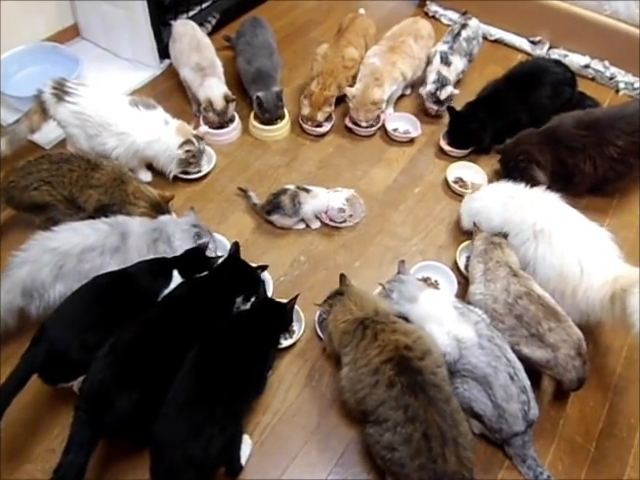 和やかなムードで始まった子猫の送別会♪