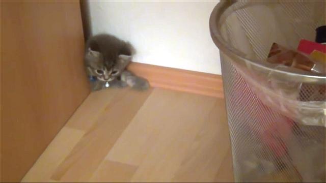 キュートな子猫のヨーダくん|机の隙間がお気に入り