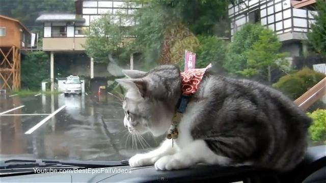 ワイパーの動きに同調する愛嬌たっぷりな猫