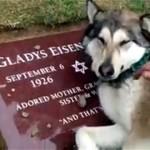 愛する家族のお墓の前で号泣する犬