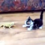 トカゲに不意を突かれた子猫の反応