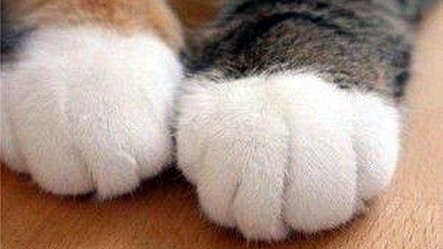 これは便利!|猫の手を借りたらこんなに簡単とは…