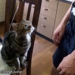 人間は猫に躾けられているのではと思える猫の仕草