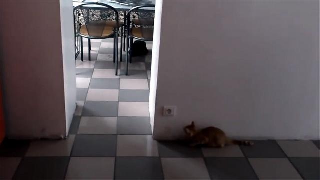 まるでギャグ漫画|ネコを驚かそうとするネコが思わぬトラップに