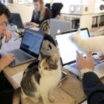 ネコだらけのオフィス|ネコと共存する会社が話題に