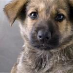 愛犬からあなたへ|犬の遺言