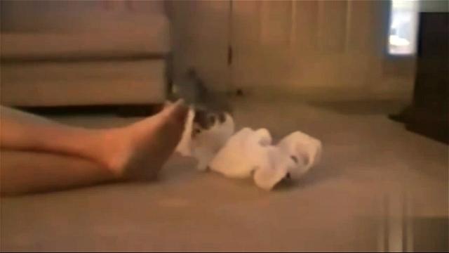 足を嗅いでみた子猫のリアクションが絶妙すぎて…(笑)