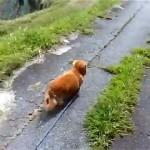 散歩中に飼い主がいきなり倒れた時の愛犬の反応が意外だった!