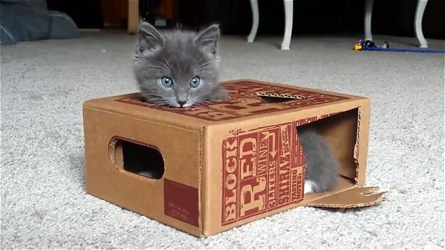段ボール箱から飛び出した自分の手を見た子猫の反応が…(笑)