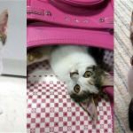衝撃!?美少女だった子猫の2年後の姿に驚いた飼い主さん