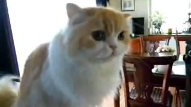 喋る猫|「おはよー」と話すと「おはよー」と挨拶を返します (=^・^=)