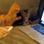 猫同士がお喋りする動画を見せた時の子猫たちの反応が可愛すぎる!