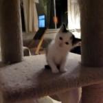 可愛すぎ!|悲しげな声でミャーンと泣く愛くるしい子猫